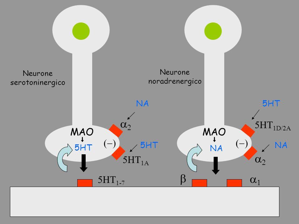 5HT 1-7 5HT NA 5HT 1A 5HT 1D/2A MAO Neurone serotoninergico Neurone noradrenergico 5HTNA 5HTNA