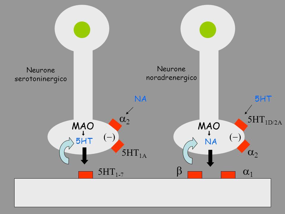5HT 1-7 5HT NA 5HT 1A 5HT 1D/2A MAO Neurone serotoninergico Neurone noradrenergico 5HTNA