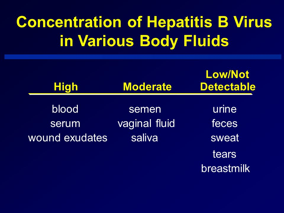 Concentration of Hepatitis B Virus in Various Body Fluids HighModerate Low/Not Detectable bloodsemenurine serumvaginal fluidfeces wound exudatessaliva