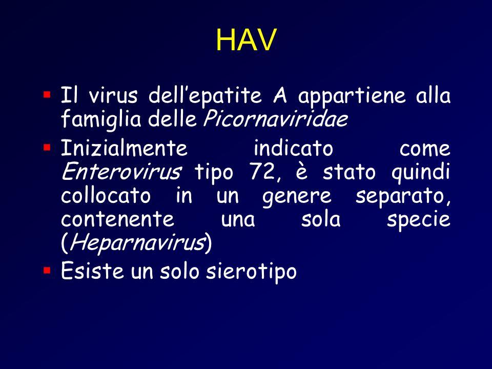 HAV Il virus dellepatite A appartiene alla famiglia delle Picornaviridae Inizialmente indicato come Enterovirus tipo 72, è stato quindi collocato in un genere separato, contenente una sola specie (Heparnavirus) Esiste un solo sierotipo