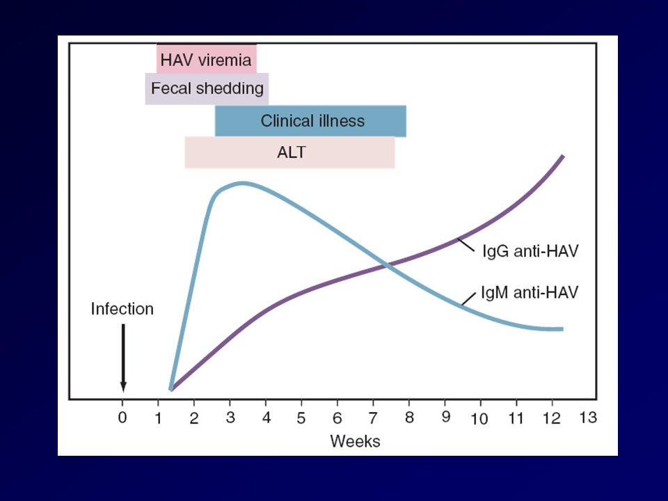 Serbatoio e trasmissione Linfezione è trasmessa per via fecale-orale