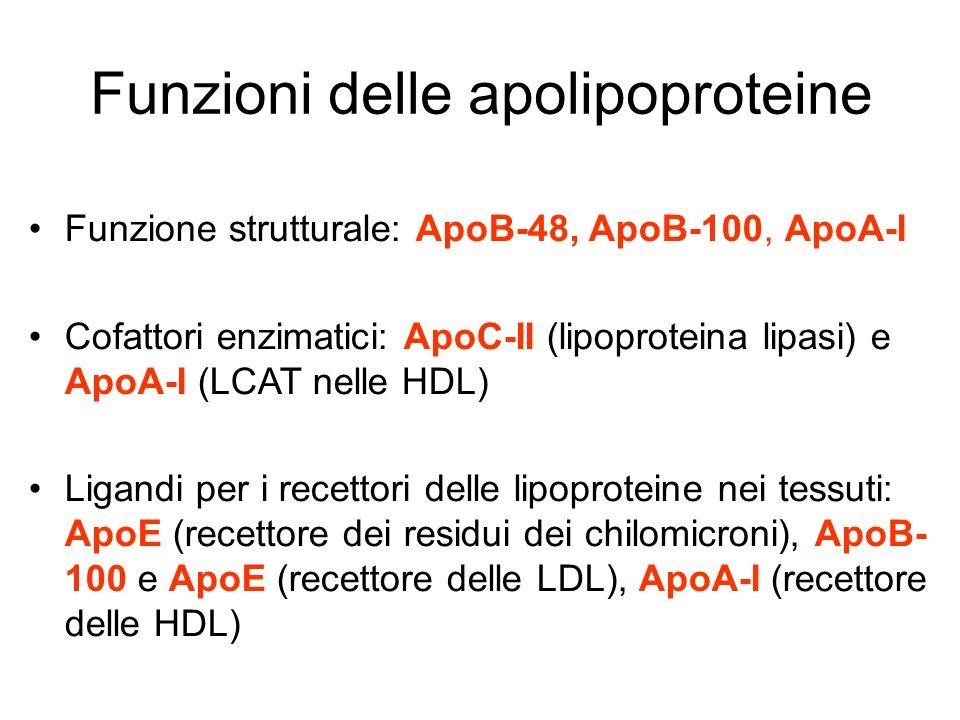 Funzioni delle apolipoproteine Funzione strutturale: ApoB-48, ApoB-100, ApoA-I Cofattori enzimatici: ApoC-II (lipoproteina lipasi) e ApoA-I (LCAT nell