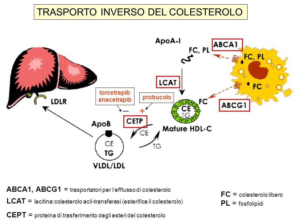 TRASPORTO INVERSO DEL COLESTEROLO ABCA1, ABCG1 = trasportatori per lefflusso di colesterolo LCAT = lecitina:colesterolo acil-transferasi (esterifica i