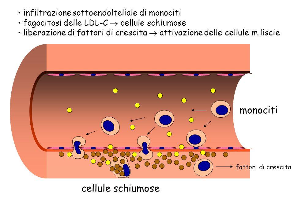 monociti cellule schiumose fattori di crescita infiltrazione sottoendolteliale di monociti fagocitosi delle LDL-C cellule schiumose liberazione di fat