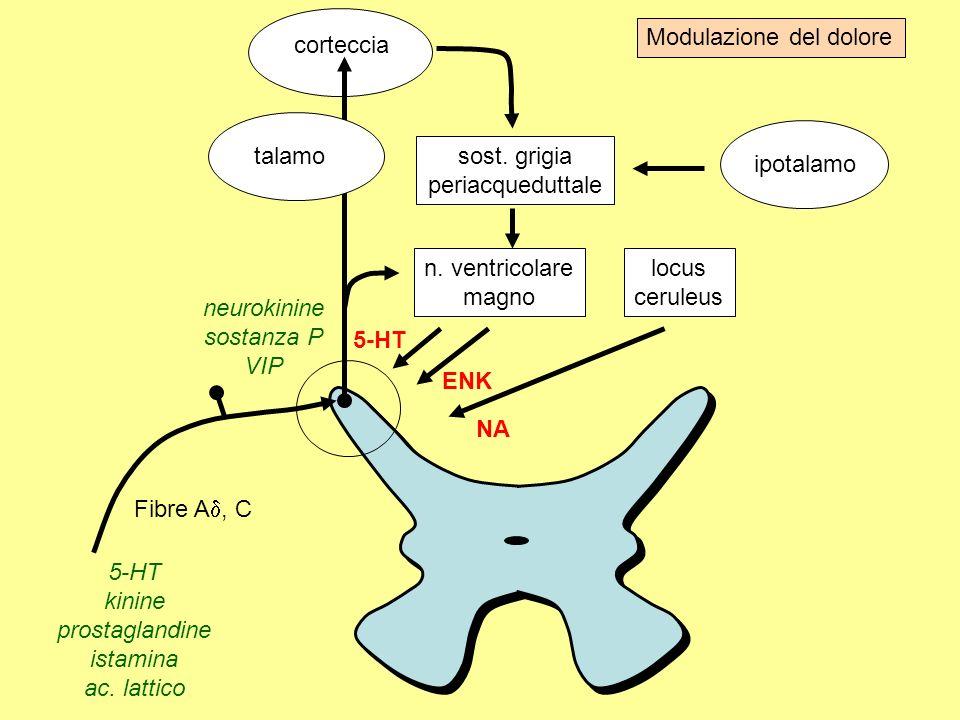Via di somministrazioneDose morfina orale1 sottocutanea, endovenosa1/3 peridurale1/10 subaracnoidea1/100