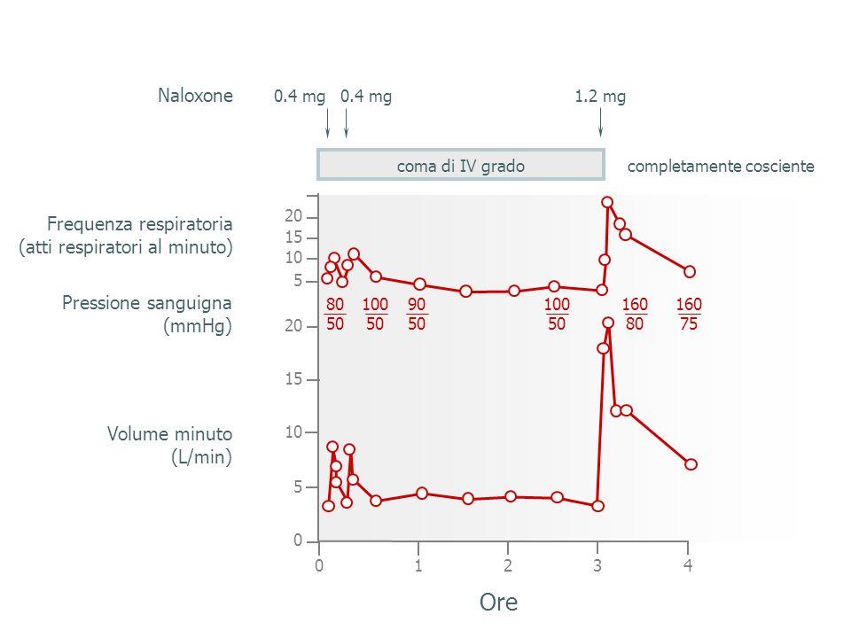 coma di IV grado 01234 0 5 10 15 20 5 15 20 10 0.4 mg 1.2 mg completamente cosciente Ore Volume minuto (L/min) Pressione sanguigna (mmHg) Frequenza respiratoria (atti respiratori al minuto) 80 50 100 50 90 50 100 50 160 80 160 75 Naloxone