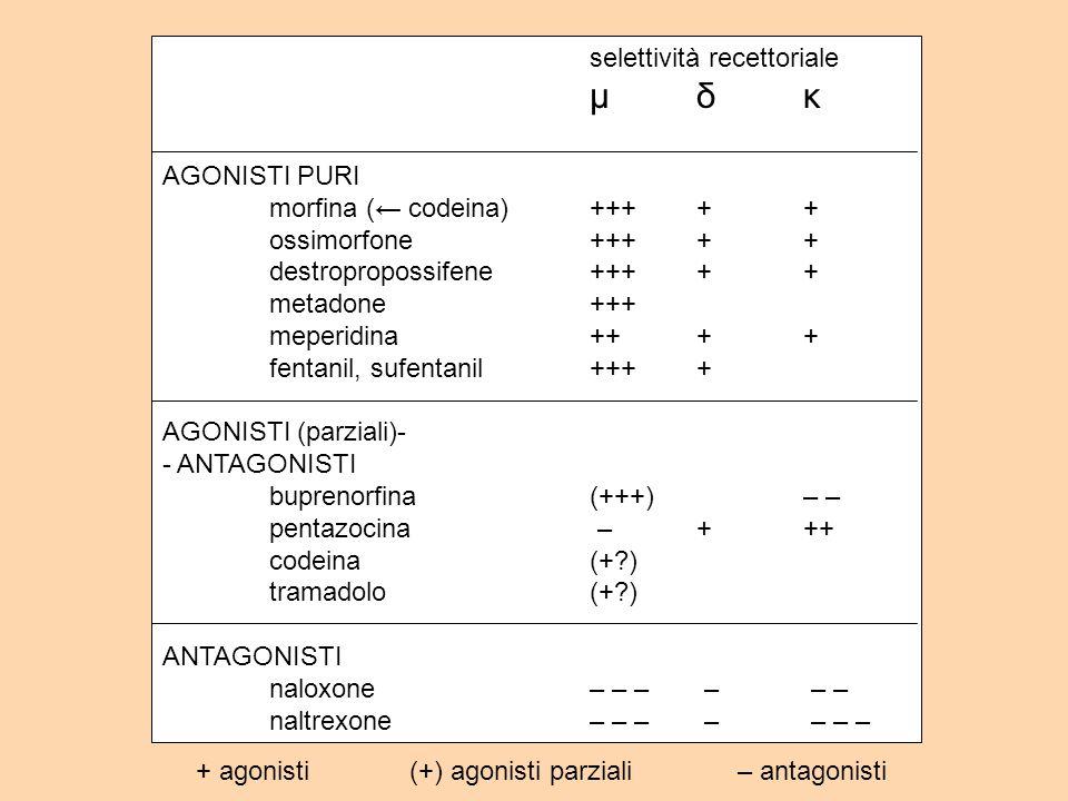 selettività recettoriale μδκ AGONISTI PURI morfina ( codeina)+++++ ossimorfone+++++ destropropossifene+++++ metadone+++ meperidina++++ fentanil, sufentanil++++ AGONISTI (parziali)- - ANTAGONISTI buprenorfina(+++)– – pentazocina –+++ codeina(+?) tramadolo(+?) ANTAGONISTI naloxone– – – – – – naltrexone– – – – – – – + agonisti(+) agonisti parziali – antagonisti