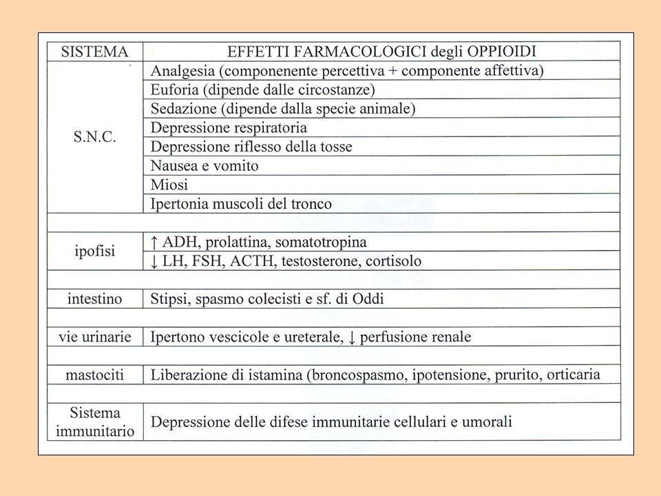 morfina 400 300 200 100 0 adenilato ciclasi AMPc % tempo Ipotesi di meccanismo biochimico della tolleranza e dipendenza Proc Natl Acad Sci USA 1975; 72: 3092