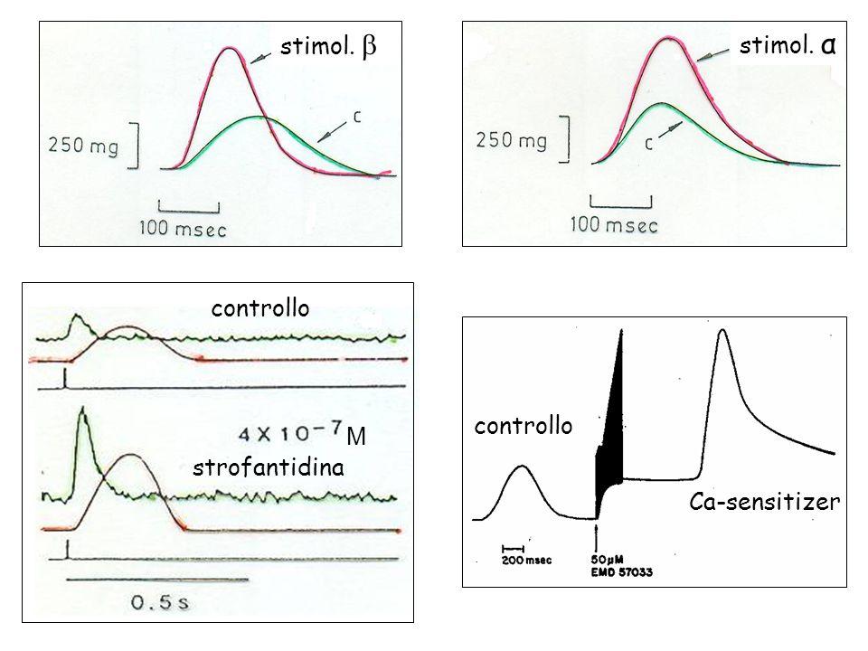 stimol. α stimol. strofantidina controllo M Ca-sensitizer