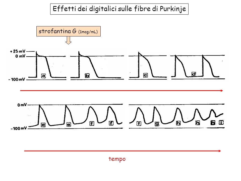 strofantina G (1mcg/mL) Effetti dei digitalici sulle fibre di Purkinje tempo