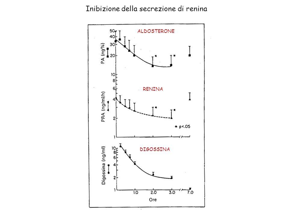 ALDOSTERONE RENINA DIGOSSINA Inibizione della secrezione di renina