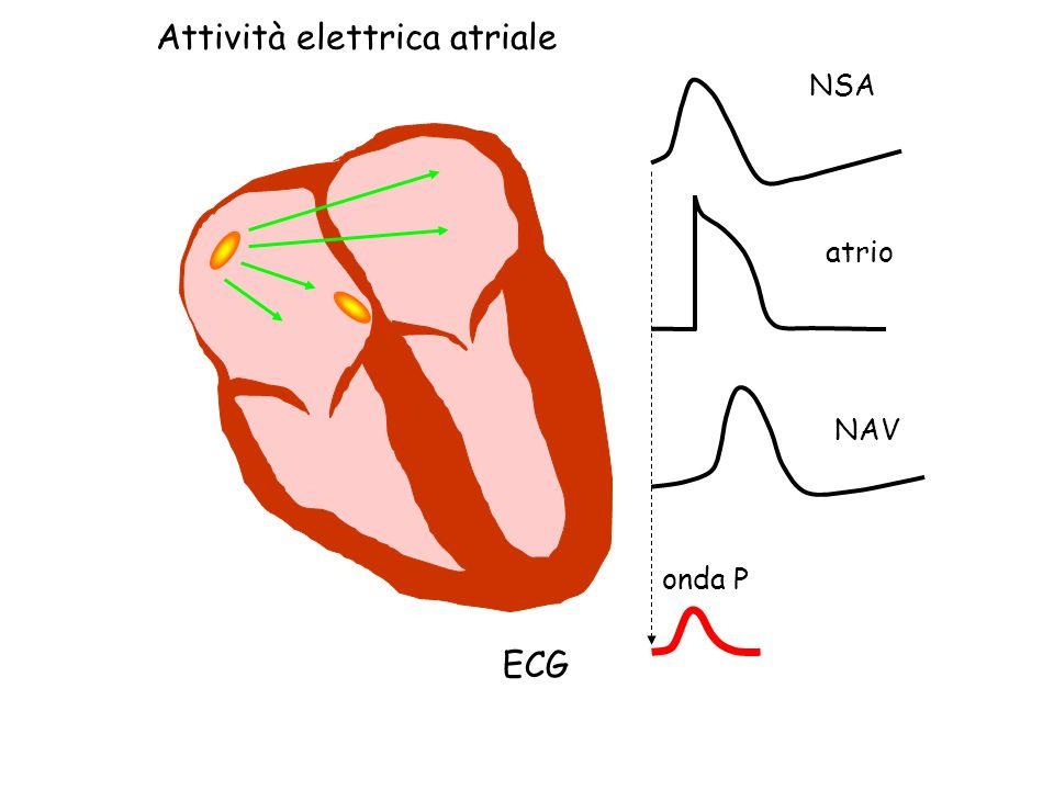 Attività elettrica atriale NSA NAV atrio ECG onda P