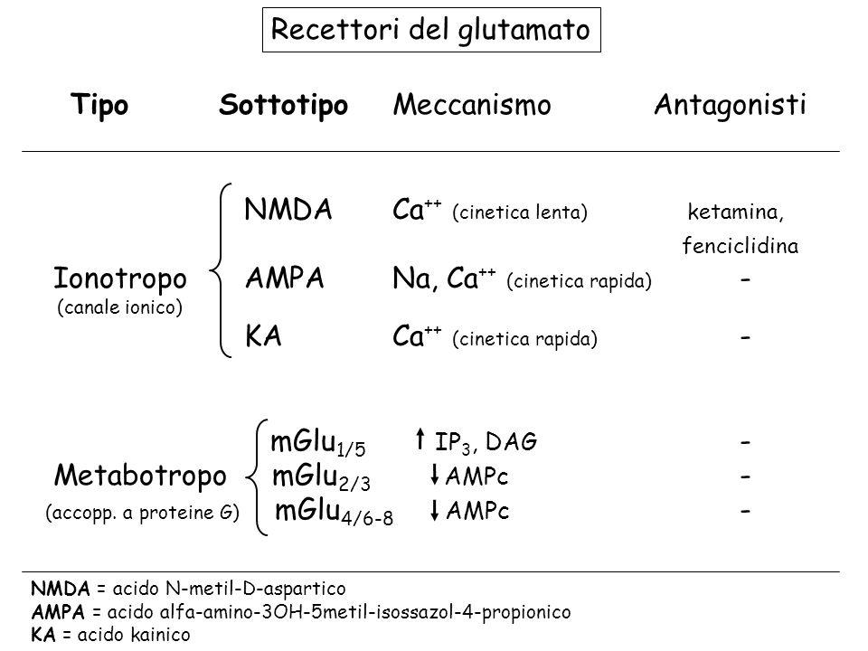 AMPA/KA glutammato dopamina (D 2 ) CORTECCIA PRE-FRONTALE AREA VENTRALE TEGMENTALE NUCLEO ACCUMBENS SINTOMI POSITIVI IPOTESI GLUTAMMATERGICA GABA NMDA 5HT 2 Sistema meso-limbico Neuropharmacology 2012;3: 1-11