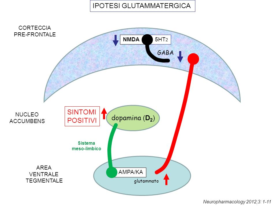 AMPA/KA glutammato dopamina (D 2 ) CORTECCIA PRE-FRONTALE AREA VENTRALE TEGMENTALE NUCLEO ACCUMBENS SINTOMI POSITIVI IPOTESI GLUTAMMATERGICA GABA NMDA