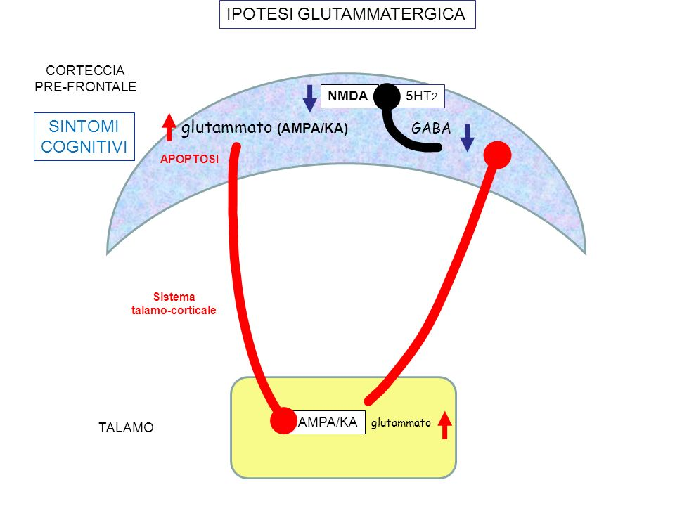 AMPA/KA glutammato (AMPA/KA) TALAMO CORTECCIA PRE-FRONTALE glutammato SINTOMI COGNITIVI IPOTESI GLUTAMMATERGICA GABA NMDA 5HT 2 APOPTOSI Sistema talam