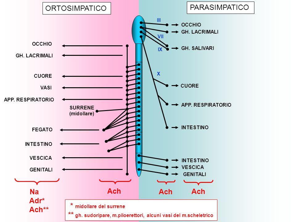 RecettoriUsi cliniciTossicità Alfa-1 IpotensioneEmorragia cerebrale Necrosi sottocutanea Ischemia agli arti Shock anafilattico Emostasi (naso-faringe) Decongestionanti mucose nasali Midriatici (esame fundus) Associati a anestetici locali Alfa-2 Ipertensione arteriosa, glaucomaIpotensione Beta-1 Insufficienza cardiacaAritmie ipercinetiche Ischemia cardiaca Aritmie ipocinetiche Beta-2 Asma bronchialeIpotensione Tachicardia Minaccia parto prematuro Simpatico- mimetici indiretti AnoressizzantiTossicomania, insonnia, tremori, ansia, psicosi ipertensione Narcolessia Sindr.
