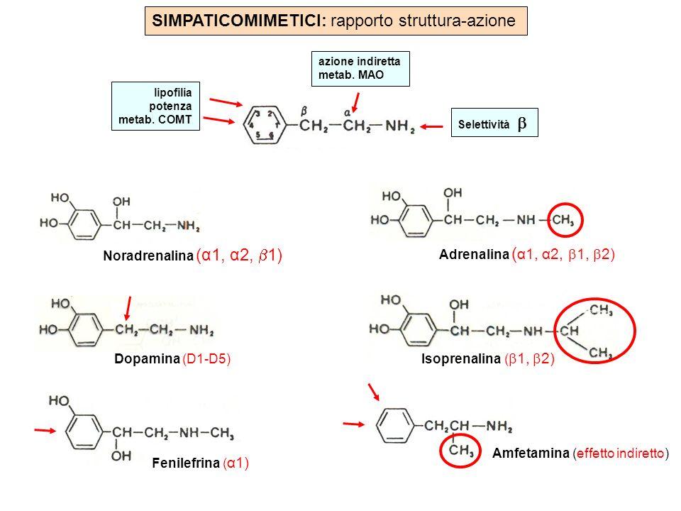 SIMPATICOMIMETICI: rapporto struttura-azione Dopamina (D1-D5) Isoprenalina ( 1, 2) Adrenalina ( α1, α2, 1, 2) Noradrenalina (α1, α2, 1) Fenilefrina (