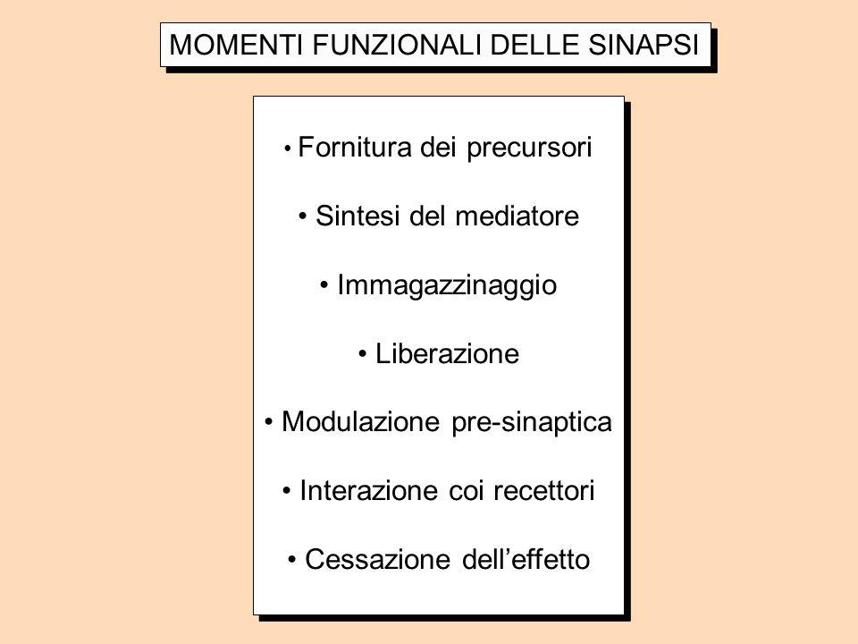 MOMENTI FUNZIONALI DELLE SINAPSI Fornitura dei precursori Sintesi del mediatore Immagazzinaggio Liberazione Modulazione pre-sinaptica Interazione coi
