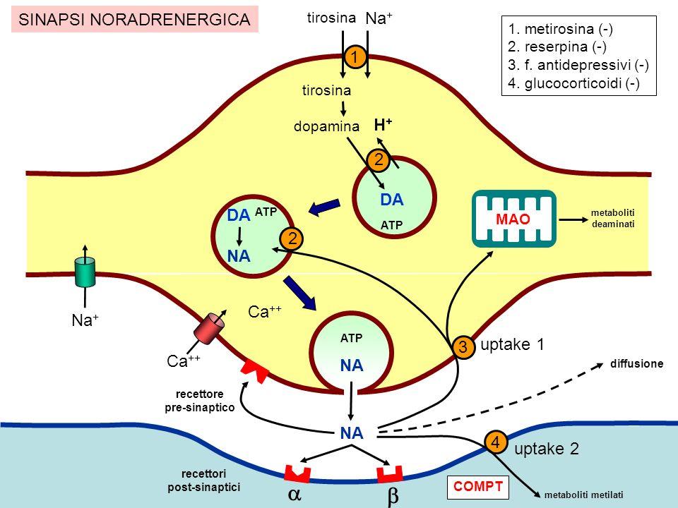SINTESI delle AMINE tirosina DOPA dopamina noradrenalina adrenalina Tirosina idrossilasi DOPA decarbossilasi Dopamina β-idrossilasi Fenil-etanolamina N-metil transferasi benserazide carbidopa metirosina INIBITORI (tappa limitante)