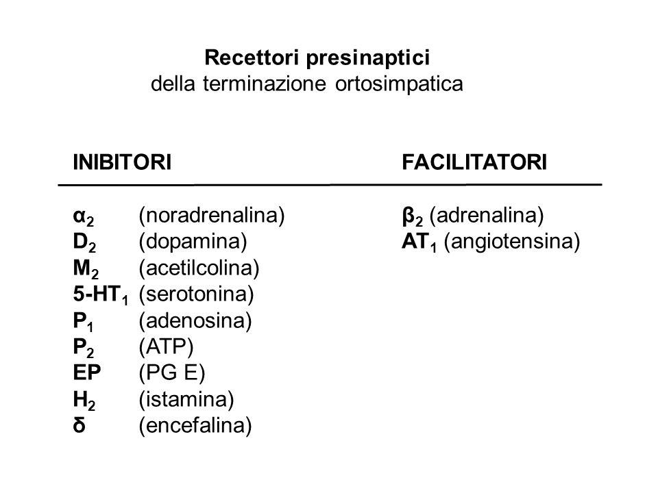 Recettori presinaptici della terminazione ortosimpatica INIBITORIFACILITATORI α 2 (noradrenalina)β 2 (adrenalina) D 2 (dopamina)AT 1 (angiotensina) M