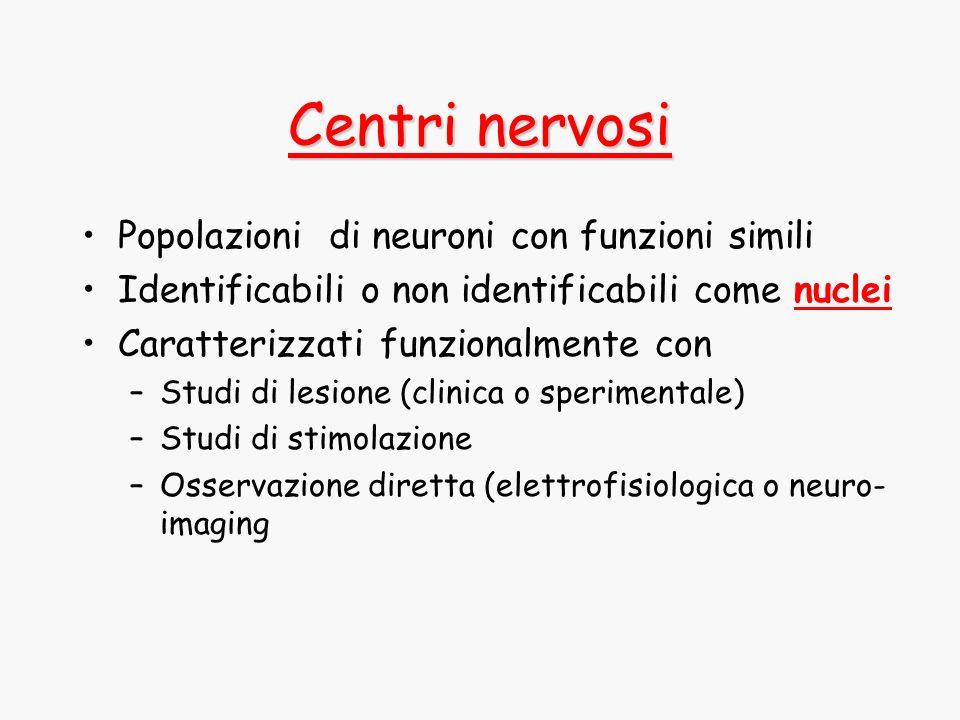Centri nervosi Popolazioni di neuroni con funzioni simili Identificabili o non identificabili come nuclei Caratterizzati funzionalmente con –Studi di