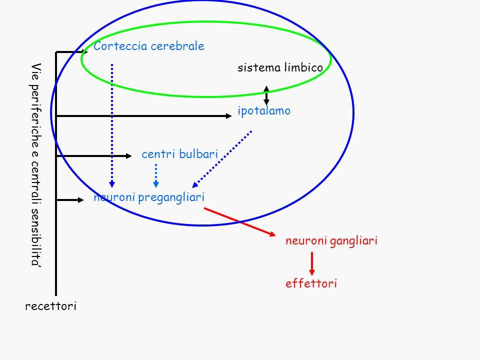 Corteccia cerebrale sistema limbico ipotalamo centri bulbari neuroni pregangliari neuroni gangliari effettori recettori Vie periferiche e centrali sen