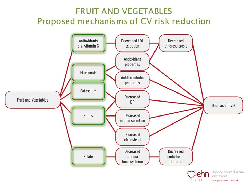 FRUIT AND VEGETABLES Proposed mechanisms of CV risk reduction 2011