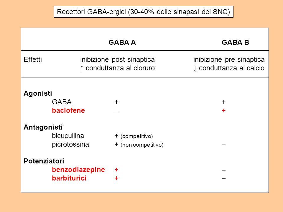 Recettori GABA-ergici (30-40% delle sinapasi del SNC) GABA AGABA B Effettiinibizione post-sinapticainibizione pre-sinaptica conduttanza al cloruro con