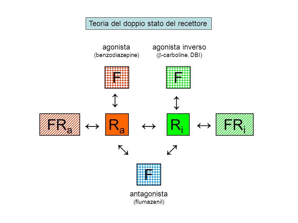 Teoria del doppio stato del recettore RaRa RiRi F F FR a FR i agonista (benzodiazepine) agonista inverso ( -carboline, DBI) F antagonista (flumazenil)