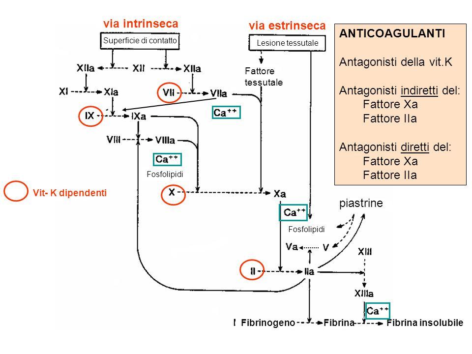 via intrinseca via estrinseca Superficie di contatto Lesione tessutale Fattore tessutale FibrinogenoFibrinaFibrina insolubile piastrine Vit- K dipende