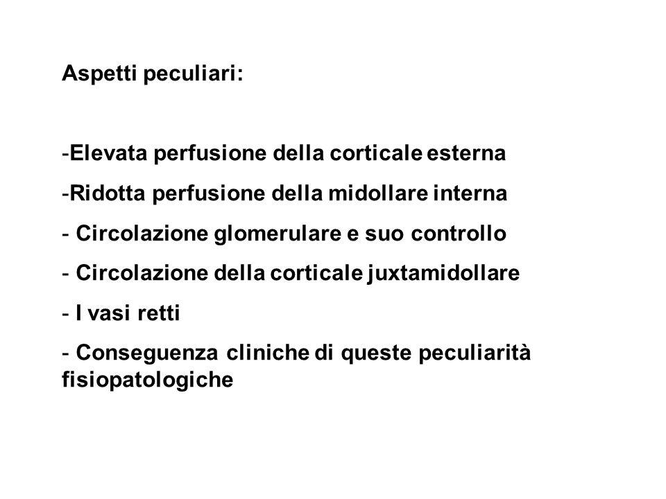 Aspetti peculiari: -Elevata perfusione della corticale esterna -Ridotta perfusione della midollare interna - Circolazione glomerulare e suo controllo