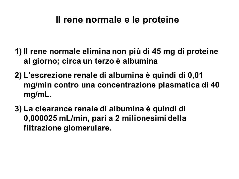 Il rene normale e le proteine 1)Il rene normale elimina non più di 45 mg di proteine al giorno; circa un terzo è albumina 2)Lescrezione renale di albu