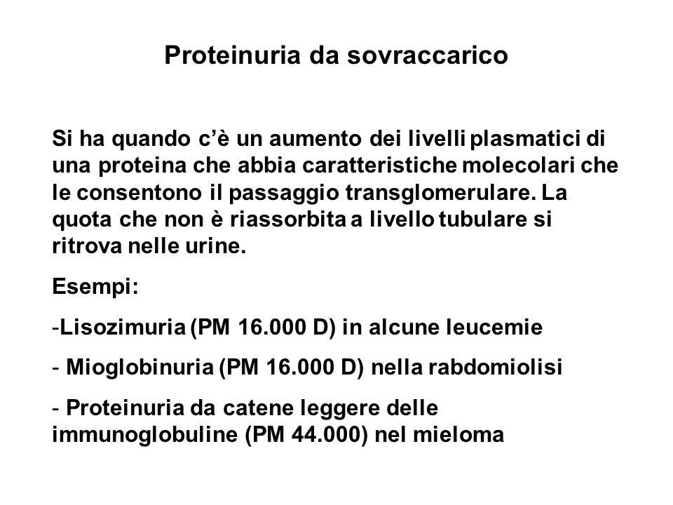 Proteinuria da sovraccarico Si ha quando cè un aumento dei livelli plasmatici di una proteina che abbia caratteristiche molecolari che le consentono i