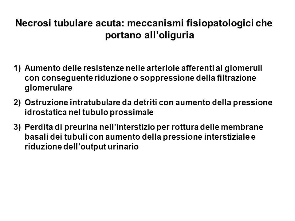 Necrosi tubulare acuta: meccanismi fisiopatologici che portano alloliguria 1)Aumento delle resistenze nelle arteriole afferenti ai glomeruli con conse