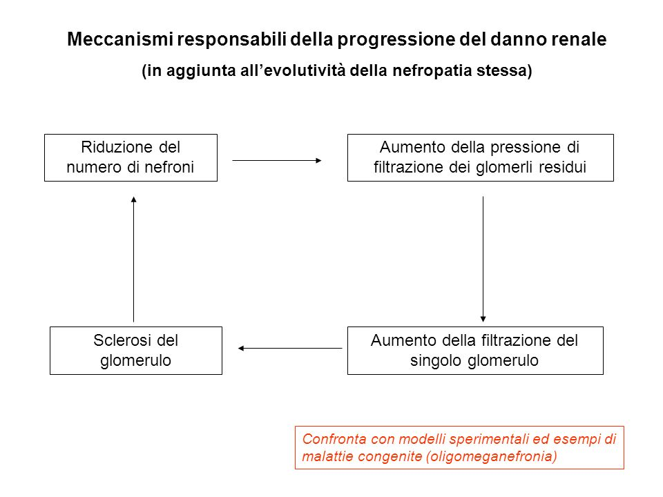 Meccanismi responsabili della progressione del danno renale (in aggiunta allevolutività della nefropatia stessa) Riduzione del numero di nefroni Aumen