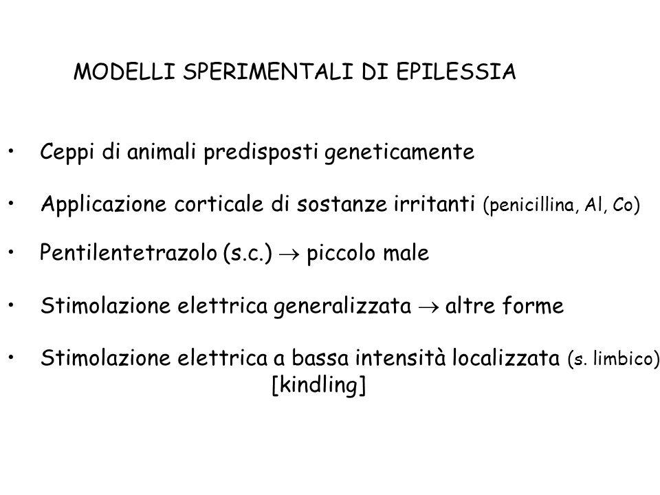 MODELLI SPERIMENTALI DI EPILESSIA Ceppi di animali predisposti geneticamente Applicazione corticale di sostanze irritanti (penicillina, Al, Co) Pentil