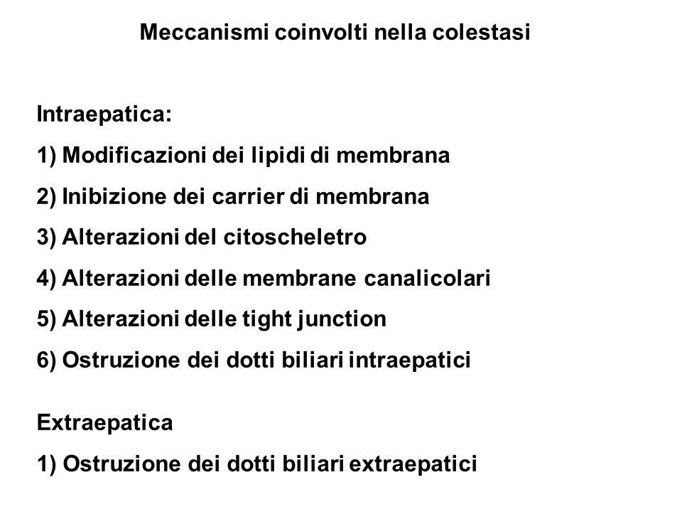 Meccanismi coinvolti nella colestasi Intraepatica: 1)Modificazioni dei lipidi di membrana 2)Inibizione dei carrier di membrana 3)Alterazioni del citoscheletro 4)Alterazioni delle membrane canalicolari 5)Alterazioni delle tight junction 6)Ostruzione dei dotti biliari intraepatici Extraepatica 1) Ostruzione dei dotti biliari extraepatici