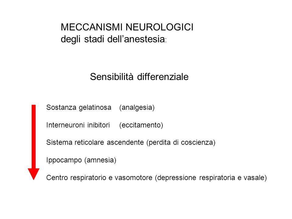 MECCANISMI NEUROLOGICI degli stadi dellanestesia : Sensibilità differenziale Sostanza gelatinosa(analgesia) Interneuroni inibitori(eccitamento) Sistem