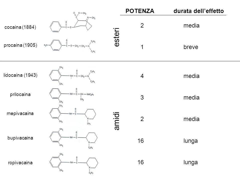cocaina (1884) procaina (1905) lidocaina (1943) mepivacaina prilocaina bupivacaina ropivacaina POTENZAdurata delleffetto 2 media 1 breve 4 media 3 media 2 media 16 lunga esteri amidi