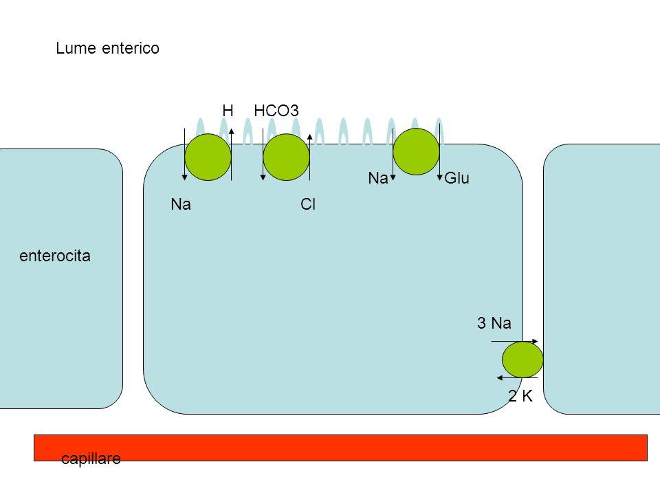3 Na 2 K Na Glu Na HHCO3 Cl Lume enterico enterocita capillare