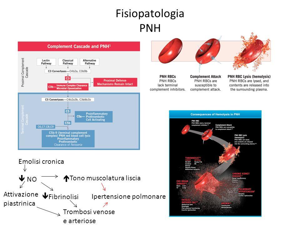 Fisiopatologia PNH Emolisi cronica NO Attivazione piastrinica Fibrinolisi Tono muscolatura liscia Trombosi venose e arteriose Ipertensione polmonare