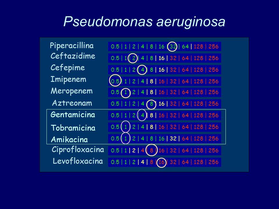 Pseudomonas aeruginosa 0.5 | 1 | 2 | 4 | 8 | 16 | 32 | 64 | 128 | 256 Piperacillina Ceftazidime Cefepime Imipenem Meropenem Aztreonam Gentamicina Tobramicina Amikacina Ciprofloxacina Levofloxacina