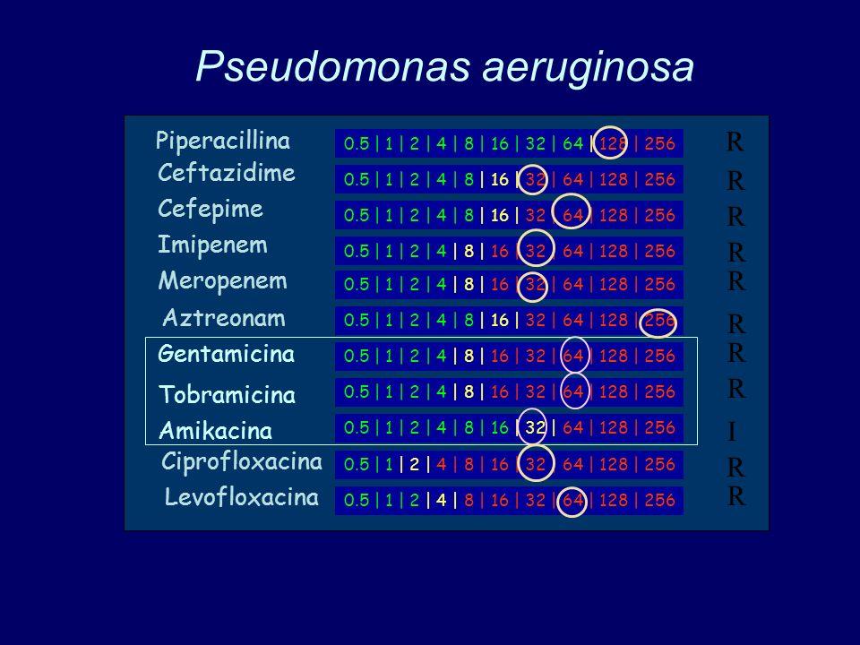 Pseudomonas aeruginosa 0.5 | 1 | 2 | 4 | 8 | 16 | 32 | 64 | 128 | 256 Piperacillina Ceftazidime Cefepime Imipenem Meropenem Aztreonam Gentamicina Tobramicina Amikacina Ciprofloxacina Levofloxacina R R R R R R R R I R R