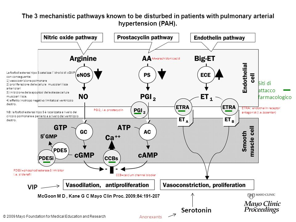 The 3 mechanistic pathways known to be disturbed in patients with pulmonary arterial hypertension (PAH).