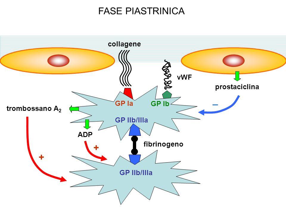 FARMACI DELLA FASE PIASTRINICA ac.arachidonico endoperossidi c.