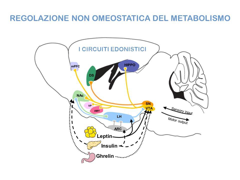 REGOLAZIONE NON OMEOSTATICA DEL METABOLISMO I CIRCUITI EDONISTICI