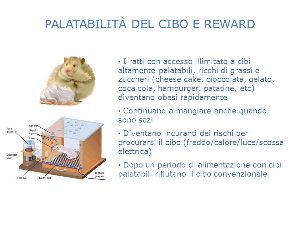 PALATABILITÀ DEL CIBO E REWARD I ratti con accesso illimitato a cibi altamente palatabili, ricchi di grassi e zuccheri (cheese cake, cioccolata, gelat