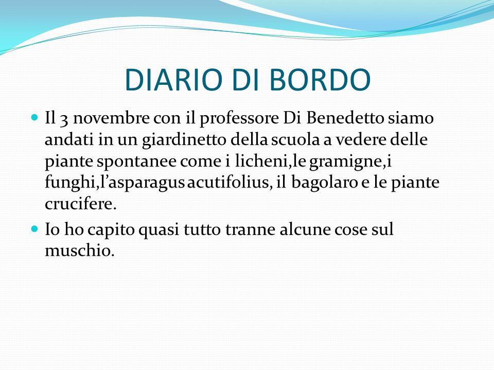 DIARIO DI BORDO Il 3 novembre con il professore Di Benedetto siamo andati in un giardinetto della scuola a vedere delle piante spontanee come i lichen