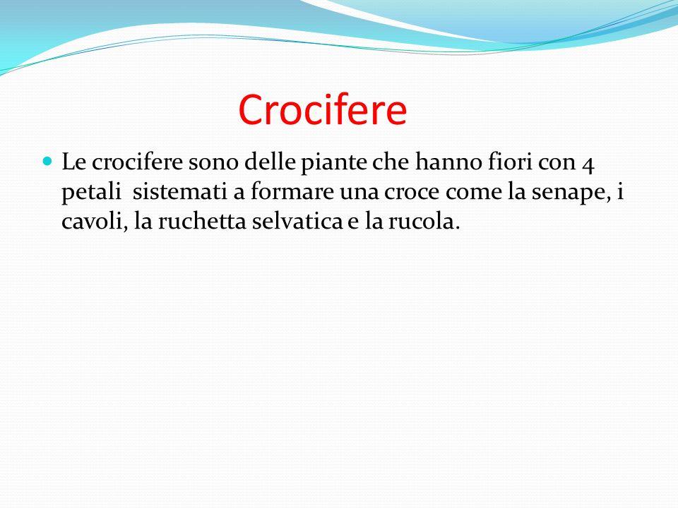 Crocifere Le crocifere sono delle piante che hanno fiori con 4 petali sistemati a formare una croce come la senape, i cavoli, la ruchetta selvatica e