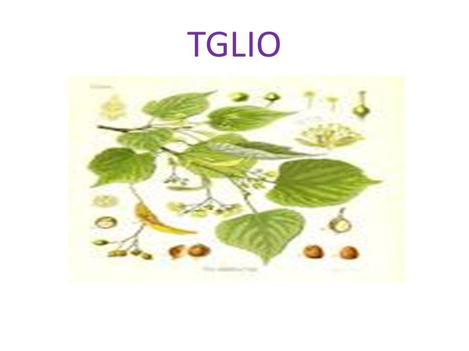 Celtis australis Il Celtis australis è il nome scientifico del bagolaro, albero spontaneo diffusamente a Ragusa.